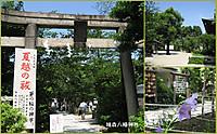 Hatonomori01